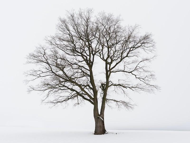 Checklist To Prepare Your Home For Winter - 11